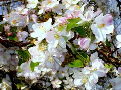 Spring - Bluebird Farm