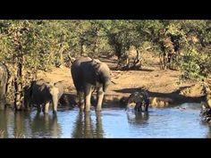 Kruger National Park is one of the largest game reserves as well as one of the best game viewing areas in Africa. Renowned for its diversity in wildlife and for its conservation efforts, Kruger National Park is a top tourist destination in South Africa.