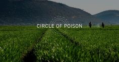 Circle of Poison documentary highlights the deadly impact of the global pesticide industry http://www.treehugger.com/corporate-responsibility/circle-poison-documentary.html