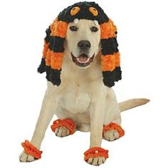Doggie Spider Costume  HALF PRICE (Orig. $9.99)  NOW ONLY $4.99 @Hannah Stone, You should get this for Griffin!!!!