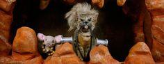 Calendário com gatinho homenageia grandes produções do cinema - http://www.garotasgeeks.com/calendario-com-gatinho-homenageia-grandes-producoes-do-cinema/