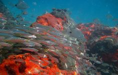 Red Reef Park
