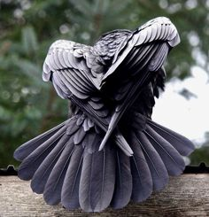 21 Ideas for black bird drawing crows ravens murders Raven Bird, Quoth The Raven, Raven Wings, Raven Feather, Crow Bird, Bird Wings, Angel Wings, Photo Aigle, Beautiful Birds