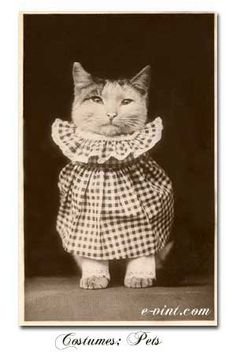 glad to know that dressing up your cat has been around for a long time.