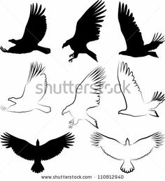stock vector : silhouette of hawk and eagle