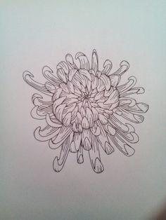 traditional chrysanthemum