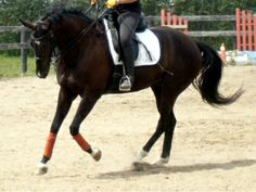 Cantering on a Circle
