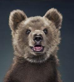 Bear Cub  by Jill Greenberg Photography