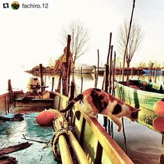 #Repost @fachiro.12 #trasimeno #trasimenolake #nature #naturelovers #landscape #landscape_lovers #paesaggio #view #volgoitalia #volgoumbria #loves_united_umbria #igers #ig_masterpiece #ig_captures #pic #photography #autumn #december #scenery #amazing #loves_umbria #liveauthentic #instaitalia #worldbestgram #cats #jump #boat #colors