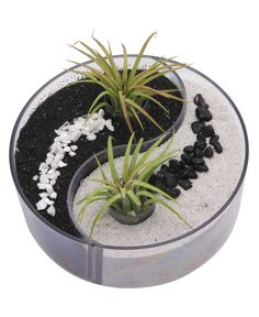 Serene yin yang design desktop terrarium with living air plants by Buddha Groove.