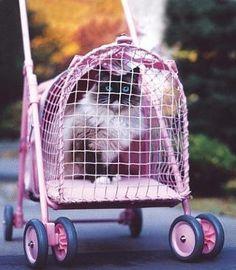 cat-stroller-kittywalk