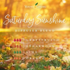 Discover the large variety of products for your healthy home and body that Young Living sells. Essential Oils Guide, Essential Oil Uses, Doterra Essential Oils, Yl Oils, Young Living Oils, Young Living Essential Oils, Young Living Diffuser, Essential Oil Diffuser Blends, Aromatherapy Oils