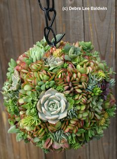 links to a website about succulent gardening and container gardening, complete with book list. Hanging Succulents, Succulents In Containers, Cacti And Succulents, Container Flowers, Container Plants, Dream Garden, Garden Art, Garden Plants, Water Plants
