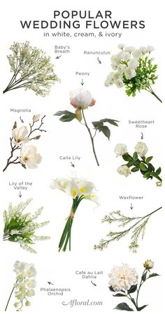 White Wedding Bouquets, Floral Wedding, Wedding White, Trendy Wedding, Wedding Flower Guide, Purple Bouquets, Wedding Greenery, Bridesmaid Bouquets, Corsage Wedding