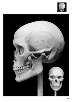 Excerpt on how to sculpt a skull from Portrait Sculpting: Anatomy & Expressions in Clay by Philippe Faraut Facial Anatomy, Skull Anatomy, Head Anatomy, Anatomy Drawing, Anatomy Art, Zbrush, Skull Reference, Anatomy Reference, Anatomy Sculpture