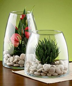 Modern glass plant terrarium design, cheap Green decorating ideas, glass home decor accessories.