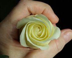 Роза полноразмерная Флешмоб Rose Clay, Icing, Peanut Butter, Desserts, Food, Sweets, Tailgate Desserts, Dessert, Postres