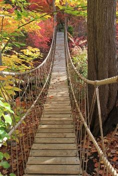 The picturesque rope bridge in the Steinhardt Garden must be traversed 'one at a time'.