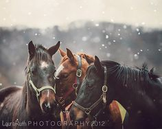 """Items similar to Snowing on Horse Photography - Nature Photo - Animal Portraits, Rustic Home Decor, Affordable Fine Art Photography - """"Nuzzle"""" on Etsy All The Pretty Horses, Beautiful Horses, Animals Beautiful, Cute Animals, Beautiful Images, Equine Photography, Animal Photography, Snow Photography, Photography Ideas"""