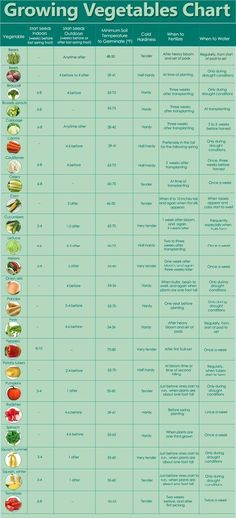 vegetable seedling planting timeline.