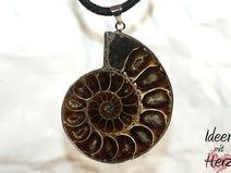 Ammonit auf Lederband