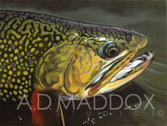 Brook Portrait ... In my opinion the most beautiful trout! ‪#‎brooktrout‬ ‪#‎admaddoxcollection‬ www.admaddox.com