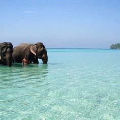 elephants in the ocean