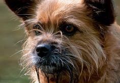 Mixed Breed, Fox, Animals, Animales, Animaux, Mixed Race, Animal, Animais, Foxes