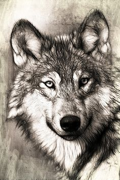Illustration Gratuite: Wolf, Portrait, Tête, Prédateur - Image gratuite sur Pixabay - 221568