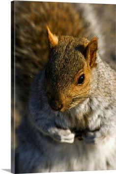 Canada, Quebec, Montreal, Mount Royal, squirrel