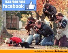 Ahí están todos tomando la foto del gatito para su Facebook.