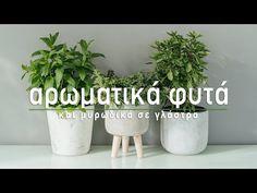 Συμβουλές για την περιποίηση του δυόσμου σε γλάστρα. Κάθε πότε χρειάζεται πότισμα, πώς τον κλαδεύουμε και πότε πρέπει να γίνεται μεταφύτευση. Planter Pots, Flowers, Gardening, Youtube, Lawn And Garden, Royal Icing Flowers, Flower, Youtubers, Florals