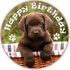 20 Best Dogs Birthday Greetings Images Dog Birthday Birthday