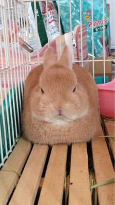 我家兔兔怎麼長得和衛生紙盒一樣方正... | ETtoday寵物動物新聞 | ETtoday 新聞雲
