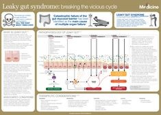 Leaky gut syndrome: breaking the vicious cycle | FX Medicine Leaky Gut Syndrome, Gut Health, Herbalism, Cycling, Medicine, Learning, Infographics, Nursing, Herbal Medicine