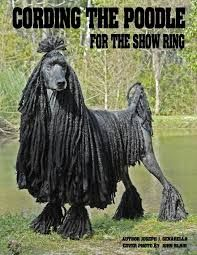 black corded poodle - Google Search