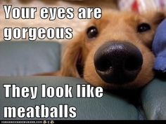 Beauty is in the Eye of the Beholder - Funny pictures and memes of dogs doing and implying things. If you thought you couldn't possible love dogs anymore, this might prove you wrong. Funny Animal Memes, Funny Animal Pictures, Funny Dogs, Funny Animals, Cute Animals, Funny Memes, Animal Pics, Animal Funnies, Dog Pictures