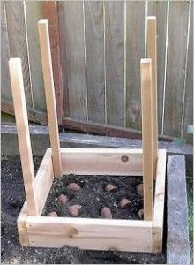 How to Grow 100 lbs. of Potatoes in Four Square Feet. It Isn't That Difficult and Can be Fun Too! Check it Out @ www.rethinksurvival.com