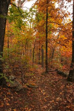 McFerrin Point Trail in Fall - via ExploringNWArkansas.com