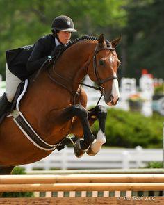 Cute Horses, Pretty Horses, Horse Love, Beautiful Horses, Show Jumping Horses, Show Horses, Parkour, Andalusian Horse, Friesian Horse
