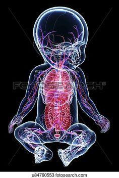 Desenho - bebê, anatomia, artwork u84760553 - Busca de Imagens Clip Art…