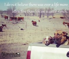 Life on a cattle ranch, priceless.