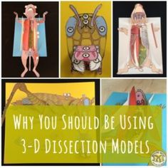 These 3D Science Dissection Paper models provide an authentic alternative to the real thing! Getting Nerdy Science