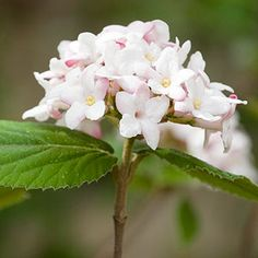Top Flowering Shrubs for the Northeast