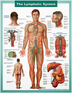 Clean Your Body's Drains: How to Detoxify your Lymphatic System