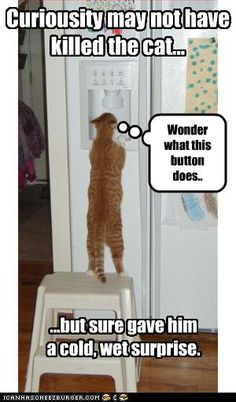 Curiosity may not have killed the cat…