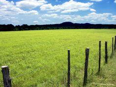 Field of green. Bandera, Texas cowboy capital of the world.