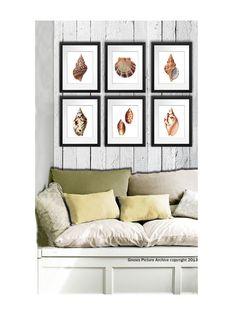 Set of 6 Sea Shells Home Decor Art Prints beach themed living room wall hanging 8x10 wall art sea shells conch scallop shells orange brown