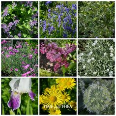 What's Blooming In My Garden In June ~ Time With Thea