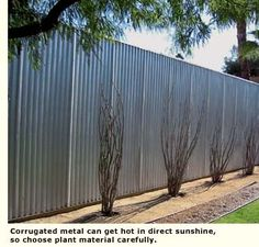 Corrugated metal can get quite hot,so you have to choose plants strategically. Bonus for colder climates. Backyard Fences, Fenced In Yard, Outdoor Landscaping, Corrugated Metal Fence, Metal Fence Panels, Bamboo Landscape, Fence Options, Privacy Fence Designs, Fence Screening